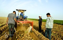 """Harvest potatoes 