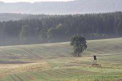 (:Linda:) Tags: mist tree germany landscape village thuringia hochsitz aspentree espe populustremula brden zitterpappel huntersperch populustree zitterpappelpopulustree