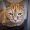 Thinking (gtncats) Tags: pet orangetabby topazlabs superbestshotsonflickr felinefaces photographyforrecreation topazimpression