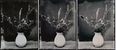 Contras in wet plate photography (Juro Kovacik) Tags: wet plate collodion alumitype