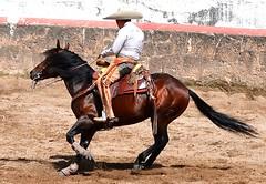 Charro 1 (Zlatan Papayalopulus) Tags: life horse man game animals mexico caballo movement cowboy boots country mexicans rancho botas