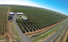 Farm 1366 Gribble Road, Yenda NSW