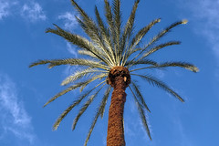 XE2 10514 09 (Larry Mendelsohn) Tags: palmtrees