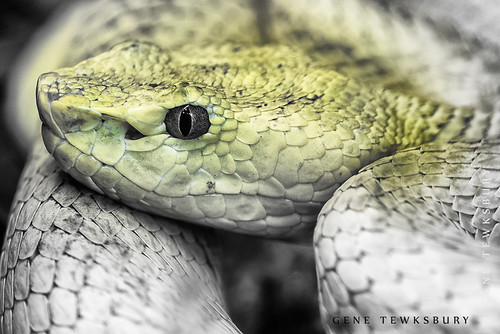 Zoo_0149_11-04-12-tewksbury-Edit-2