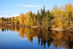 CHENA River - Fairbanks Alaska (scotrailm 63A) Tags: fall alaska river fairbanks chena utdoors