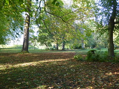 Haddo House, Aberdeenshire (laura.piepad) Tags: autumn mushroom leaves woodland scotland aberdeenshire autumncolours nationaltrust haddo haddohouse nationaltrust