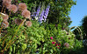My Garden - Summer 2014 (Mark Wordy) Tags: flowers summer mygarden delphinium flowerbeds tiddles alliumgiganteum rosemunsteadwood