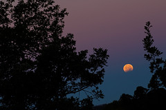 _MG_6936 (JacobBoomsma) Tags: moon october 8 8th siouxfalls lunareclipse 2014 shermanpark
