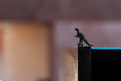 WWPW2014 Canberra (DrSchabbs) Tags: blue black water dinosaur australia photowalk canberra roar act australiancapitalterritory takingontheworld wwpw2014
