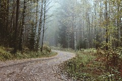 Foggy afternoon (idasalminen) Tags: autumn trees light mist fall home nature beautiful leaves fog fairytale forest landscape october afternoon path foggy peaceful