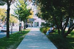 (sarahb.1) Tags: park city trees urban sun sunlight tree green nature sunshine nikon cityscape montral montreal d3100