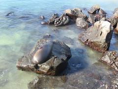 Galapagos - San Cristobal-5