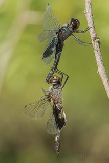 black saddlebags (explored 9/25/2014)