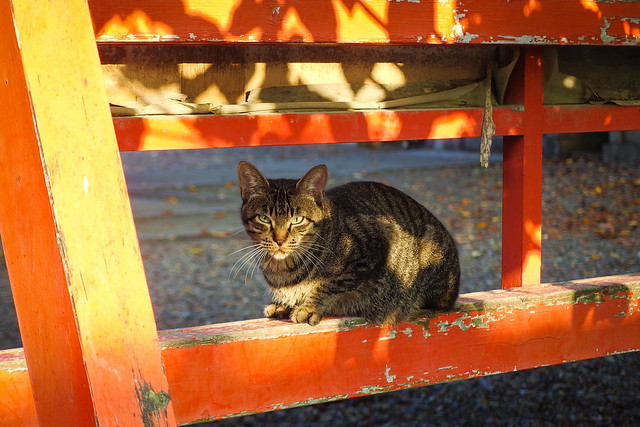 Today's Cat@2014-09-29