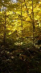 _LZX2112 (Vagamundos / Carlos Olmo) Tags: park autumn ontario color colores fallfoliage otoo canad fallcolours fallinlove algonquinprovincialpark vagamundos ontarioparks otoomagico algonquing vagamundoscanada