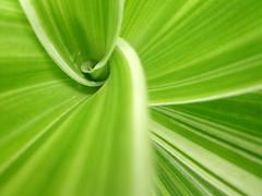 greener white