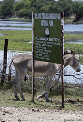 Kumaga Entry (Zsuzsa Por) Tags: africa wildlife botswana makgadikgadi wildlifeafrica canonistas canoneos7d canonef70200mmf28lisusmii