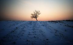 Magny / Solitude (Mrk Borbly | markborbely.com) Tags: winter sunset snow tree nature landscape lights hungary pannonhalma