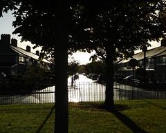 Marino Sunrise 22-10-2013 (gallftree008) Tags: park street city trees ireland dublin sun tree nature sunrise dub dublincity