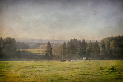 Bucolic (AsAbel14 - Je suis Charlie) Tags: autumn horses panorama painterly mountains fall rural germany landscape outdoors deutschland countryside woods scenery europa europe herbst quotes alemania dreamy landschaft pferde wald allemagne idyllic alemanha bucolic niedersachsen lowersaxony lndlich zitate malerisch clausthalzellerfeld harzmountains nationalparkharzharznationalpark