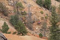 IMG_2392 (bluegrass0839) Tags: canyon national hoodoo bryce zion zionnationalpark brycecanyon nationalparks narrows hoodoos horsebackride parkthe