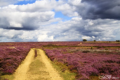 Track on Rudland Rigg (maureen bracewell) Tags: uk summer england nature sunshine clouds rural walking landscape countryside track purple heather moors farndale northyorkshiremoors redbubble maureenbracewell rudlandrigg