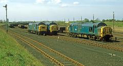 Plenty of freight at Goole. (delticfan) Tags: goole sidings class37 37123 37113 37137 eetype3