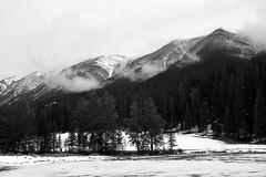 Snowy Banff (JB by the Sea) Tags: blackandwhite bw snow canada rockies alberta banff rockymountains banffnationalpark canadianrockies september2014