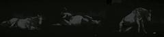 je me leve et tu me bouscule (Jean-marc17340) Tags: horse inspiration art collage composition cheval noiretblanc imagination cration