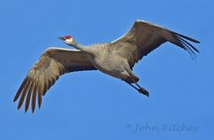 Flyover (ritchey.jj) Tags: cranes