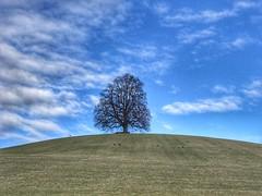 Der einsame Baum (Blende2,8) Tags: schwäbischalb badenwürttemberg wolken himmel wiese reutlingen alteburg baum