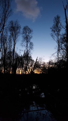 Darkness falls on the forest