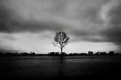 Iran - mazandaran - mahmood abad (ali.fathi) Tags: iran coposition creative travel trip 1855 xt10 2017 fujifilm tree nature outdoor bw blackandwhite monochrome