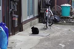 Today's Cat@2017-03-31 (masatsu) Tags: cat thebiggestgroupwithonlycats catspotting pentax mx1