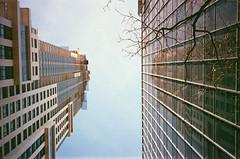 up, at 88 Scott street (.grux.) Tags: ricohyf20 film konicavx400 expiredfilm up buidlings sky tree reflection grainy testroll toronto