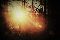 one golden morning (camerito) Tags: sunrise sonnenaufgang warm light warmes licht sunbeams sonnenstrahlen camerito nikon1 j4 austria österreich unlimitedphotos flickr