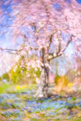 7-web-watermark (Brian M Hale) Tags: tower hill botanic botanical garden boylston ma mass massachusetts outside outdoors nature tree colorful brian hale brianhalephoto new england newengland usa lensbaby velvet 56 velvet56 soft focus softfocus