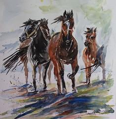 Escape GPA@2017 foto 919 REC (Mia Farrah PA) Tags: horse caballos galope manada
