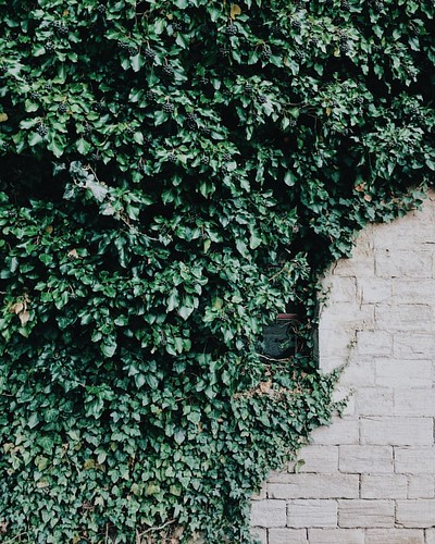 The power of nature 🌿#ihavethisthingwithivywalls