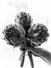 (giovdim) Tags: artichoke artichaut giovdim giovis bw bouquet hand offer spring prelude