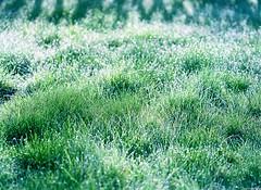Early morning frost (miroir.photographie) Tags: 2017 marlylaville argentique pentax645 pentax645nii analog analogique filmisnotdead film france winter pentax pentaxart plustek pentaxflickraward