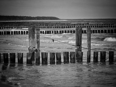 alles voller vollpfosten ;-) (paddy_bb) Tags: travel 2017 olympusomd deutschland paddybb beach germany zingst darss mecklenburgvorpommern strand sand ostsee
