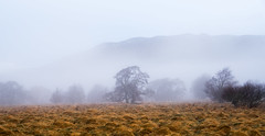 Emerging morning (Barry Folan) Tags: morning fog gloamin landscape scotland highlands nature trees pentaxart pentaxk1 pentax
