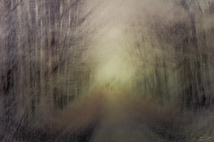 December... (montier_isabelle) Tags: wood forest winter cold simplysuperb icm abstract