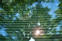 CAMPUS.Spring2017.1271 (ncsuweb) Tags: spring spring2017 flare window campus chass humanities hass detail reflection trees