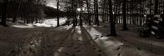 Barton's Cove, Gill, MA (koperajoe) Tags: shadows footprints winter westernmassachusetts treesillhouettes panorama blackandwhite newengland snow