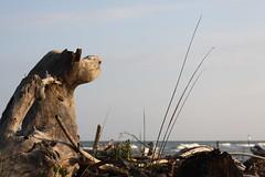 Il can da guardia coste!! (Annamaria Rizzi) Tags: mare tronco portotolle