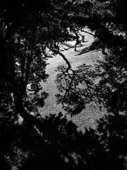 352/365 Field/ Trees / Street (De Style) Tags: ricoh gxr a12 28mm f25 black white street photography light shadow ampang road klcc kuala lumpur city outdoor field trees