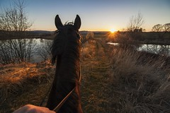 Towards the west (frantiekl) Tags: horse a11 thoroughbreds friend riding ride landscape sunset sun light sunlit sky water outside sunshine trip wandering wander wey path nature trees westbohemia