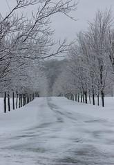 The Alley in Winter (pegase1972) Tags: qc québec quebec montérégie monteregie winter snow hiver neige tree arbre licensed getty exclusive license